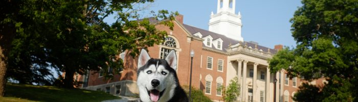 husky in front of wilbur cross
