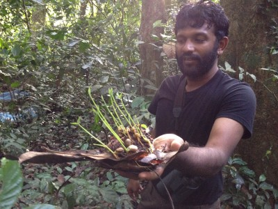 Ashwin hunting for seedlings in a forest fragment in the Western Ghats.