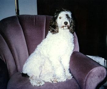 Molly on a big armchair