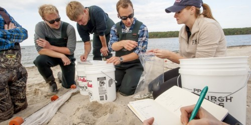 UConn Avery Point students working with Professor Hannes Baumann on the Connecticut shore on Oct. 9, 2015