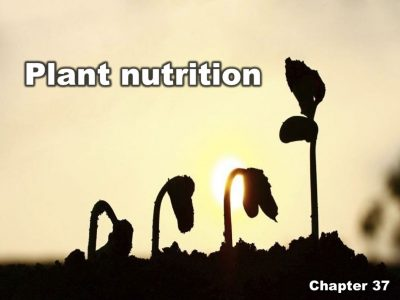 Chapter 37 | Plant nutrition