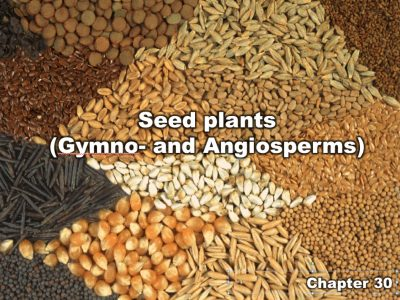Chapter 30 | Seed plants