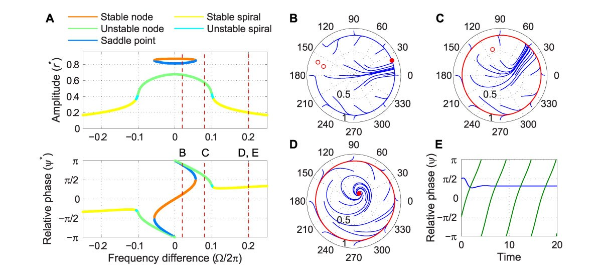 Driven behavior of a supercritical double limit cycle oscillator under intermediate forcing.