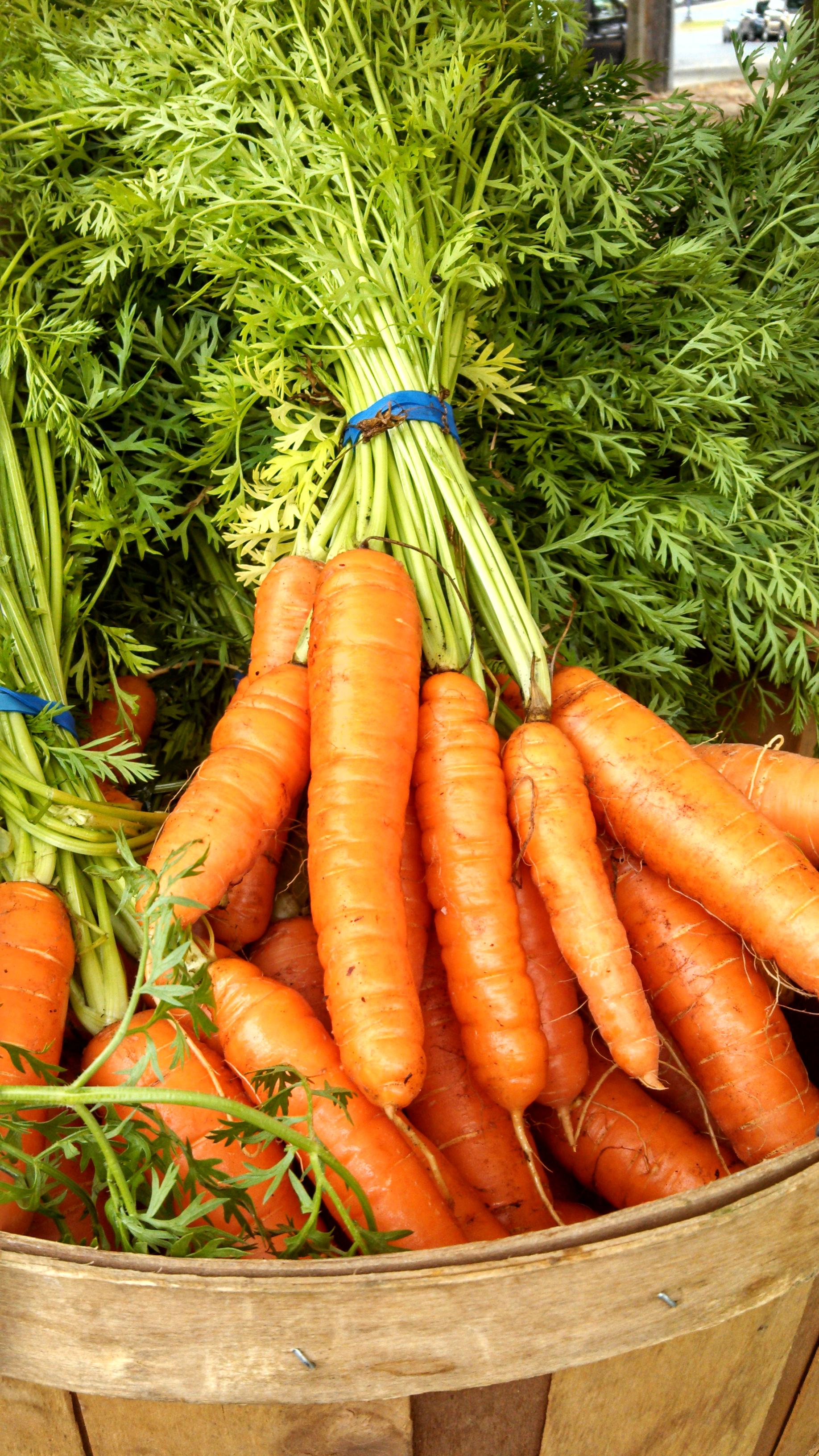 carrot%20danbury